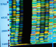 Mining Electronic Medical Data to Advance Genetic Research